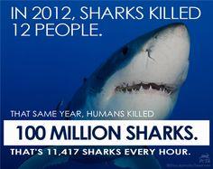Who is deadliest predator of all? HINT: It's NOT sharks: http://www.peta.org/b/thepetafiles/archive/2013/08/04/the-deadliest-predator.aspx