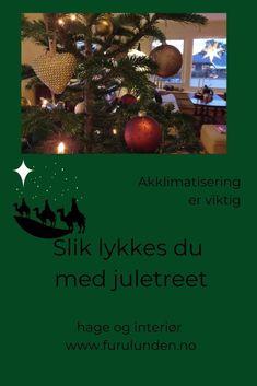 Vil du være helt sikker på at juletreet ikke kommer til å drysse, bør du unngå gran og heller gå for edelgran. Det viktigste du kan gjøre for å unngå at juletreet skal begynne å drysse, er å la det få litt tid til å akklimatisere, tilpasse seg før du tar det inn i stua. #juletre #jul #pyntetiljul #stellavjuletre #furulunden Christmas Bulbs, Christmas Decorations, Holiday Decor, Home Decor, Decoration Home, Christmas Light Bulbs, Room Decor, Christmas Decor, Ornaments