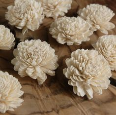 Zinnia-check out the craft site