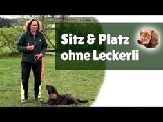 Hund bei Fuß beibringen 2 - Du erfährst, wie du auch deinem älteren Hund Fuß beibringen kannst - YouTube