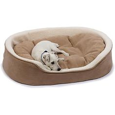 Petco Oval Tan and Cream Lounger Dog Bed - Durable Dog Beds and Lounger Dog Bed from petco.com