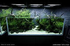 Sumida aquarium - reloaded