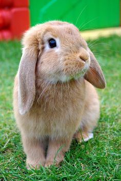 I love bunnies! Cute Wild Animals, Cute Little Animals, Cute Funny Animals, Animals Beautiful, Animals And Pets, Cute Bunny Pictures, Rabbit Pictures, Cute Animal Photos, Cutest Bunny Ever