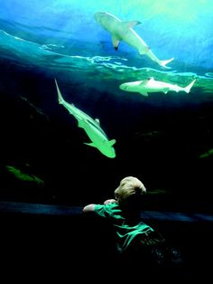 My new home province. Vancouver Aquarium, Visit Vancouver, Virtual Museum, Family Activities, My Eyes, Northern Lights, Road Trip, Science, Centre