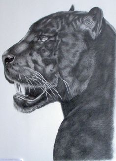 Panther by kad-portraits on DeviantArt Black Panther Drawing, Black Panther Tattoo, Black And White Drawing, Pencil Art Drawings, Cat Drawing, Animal Sketches, Animal Drawings, Jaguar Tattoo, Big Cat Tattoo