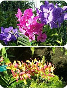 Experience The Thrill Of Discovering Thousands Orchids And Other Tropical Flowers In Heart Barbados Countryside