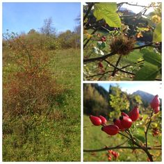 November - Spätherbst November, Fruit, Blog