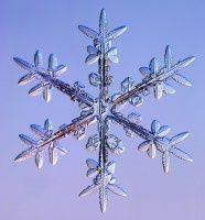 snowflake - under microscope