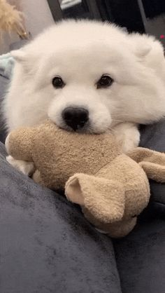 Super Cute Puppies, Cute Baby Dogs, Cute Baby Animals, Funny Animals, Cute Puppy Videos, Funny Animal Videos, Cute Puppy Gif, Samoyed Dogs, Cute Creatures