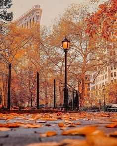 Madison Square Park ~ NYC
