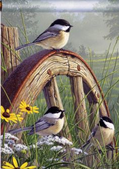 "️Birds ~ ""Meadow's Edge Chickadees"" by Jim Hautman Bird Pictures, Pictures To Paint, Pretty Birds, Beautiful Birds, Bird Drawings, Horse Drawings, Watercolor Bird, Tole Painting, Wildlife Art"