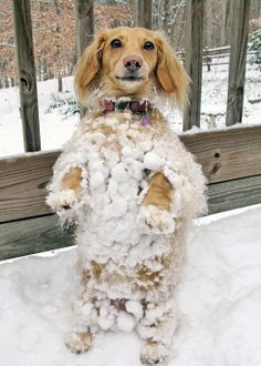 funny snow pictures | ... Short of it All: A Dachshund Dog News Magazine: Abominable Snow Dog