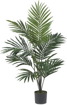 Nearly Natural Artificial Kentia Palm Silk Tree - Green Palm Tree Plant, Palm Trees, Fake Plants, Artificial Plants, Tree Id, Trees Online, Silk Tree, Potted Trees, Tree Silhouette