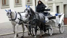 PETITION - Ban Horse-Drawn Carriages After Yet Another Accident  Horse-Drawn_Carriageby-adam-jones