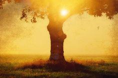BIJ NACHT - ZEGEN  Als de dag komt dat je struikelt, moge dan de dans op de aarde je meenemen in haar werveling, je weer in evenwicht brengen.   Als je ogen bevriezen van de tranen, achter het grijze venster en de geest van de tijd en verlies aan je knaagt,  moge dan een veld vol kleuren, indigo,rood, groen en azuurblauw je weer doen ontwaken in een weide van genot  Wanneer je geest rafelt, je denken een vlek is op de oceaan,  het lijkt dat je alle grond verloren bent, het zwart onder je…