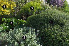 1 : Sarcopoterium spinosum  2 : Ballota pseudodictamnus  3 : Acanthus mollis  4 : Coronilla glauca  5 : Euphorbia characias subsp. wulfenii