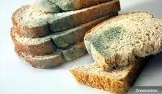 Os mofos, também chamados de bolores,  são espécies de fungos filamentosos que se desenvolvem em matéria orgânica. Estes mofos possuem a capacidade de decompor a matéria orgânica.  Alguns tipos de mofos são danosos a saúde humana, como é o caso do bolor de pão e de outros alimentos. Isto ocorre, pois eles estragam e apodrecem os alimentos. Ao comer um alimento (pão, fruta, legume, etc) é sempre importante verificar se o mesmo não se encontra embolorado.