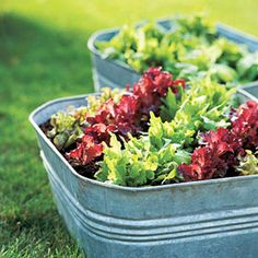 Simple Salad-Garden Containers