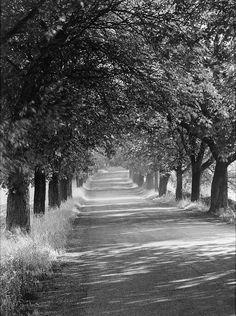 Alley At Cappenberg Castle, 1950's, Albert Renger-Patzsch. (1897 - 1966)
