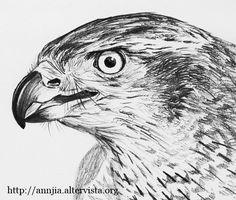 Risultati immagini per disegni a matita spettacolari pencil drawing pencil drawings for Disegni di cavalli a matita