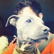 Image result for tom holland dog