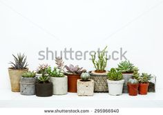 Variety of Succulents and Cactus in different concrete pots on the white shelf. Scandinavian hipster home decoration.