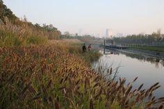 Turenscape - Shanghai Houtan Park
