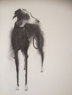 Sally Muir 'Long Dog,' charcoal on paper. She is brilliant Animal Paintings, Animal Drawings, Art Drawings, Greyhound Art, Italian Greyhound, Most Beautiful Dogs, Lurcher, Dog Illustration, Dog Portraits
