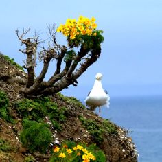 Seagull and flowers at Anacapa Island in Southern California