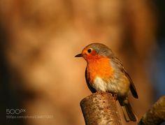 Robin portrait #PatrickBorgenMD
