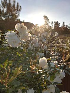 Sunlight filtering through beauty @nach
