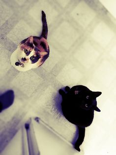 #princessthecutiecat #calicocutiecat #cutiecat13 #blackcatcutiecat #leiathecutiecat