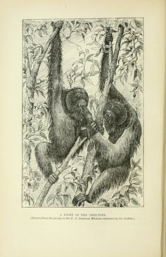 Two years in the jungle : - Biodiversity Heritage Library