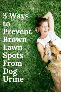How To Repair Grass Damaged By Dog Urine Grasses