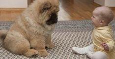 У малыша была парализована одна сторона тела, и тогда врач посоветовал семье купить определённую собаку. Все были в шоке от её действий – В РИТМІ ЖИТТЯ