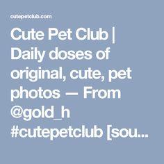 Cute Pet Club   Daily doses of original, cute, pet photos — From @gold_h #cutepetclub [source:...