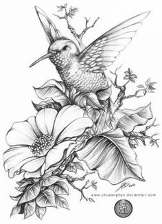 Flower Drawing Hummingbird 蜂鸟 done for a book cover size, HB, - Bird Drawings, Pencil Art Drawings, Art Drawings Sketches, Animal Drawings, Tattoo Drawings, Tattoo Cat, Flower Drawings, Drawing Flowers, Tattoo Fish