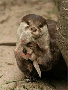 Otter mamma and babe