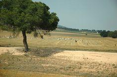 Serie #Viajesentren. Paisaje de campo con ovejas y pastor en la provincia de Albacete, España. Foto de #ignacioklindworth-2012