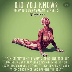 Fitness & Exercise tips for people with Autoimmune Diseases Sport Nutrition, Nutrition Education, Back Exercises, Stretching Exercises, Health And Fitness Articles, Health Fitness, Poster Sport, Daily Stretches, Upward Dog