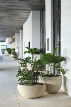 Agatha O l 1 Hotel, Mi-ami Beach? Er sagte der Perakottar zur Maitresse à Pènser … - Pflanzen Garten Ideen Drought Tolerant Landscape, Concrete Planters, Outdoor Pots And Planters, Big Planters, Large Garden Pots, Balcony Garden, Plant Decor, Plant Art, Backyard Landscaping