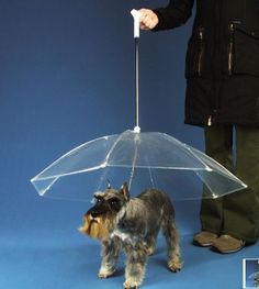 What a great invention! Maybe Cody will actually go outside in the rain with one of these!