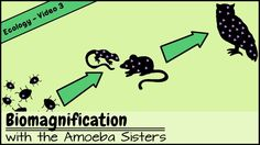 Join the Amoeba Sisters as they explore biomagnification! Discover why toxins are especially bad news for high level consumers. www.youtube.com/watch?v=L8149TO0EU0 #Science #Biology #Ecology