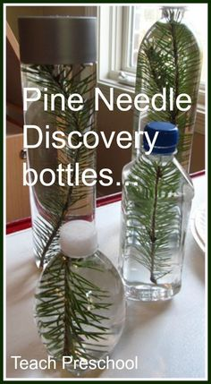pine needle discovery bottles - Make with the kids at preschool. Add water, pine needles, and glitter to a water bottle and hot glue cap on top.