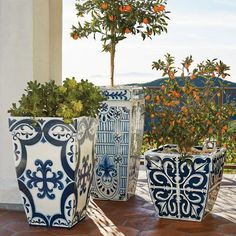 These are pretty! One or two out front would be gorgeous, especially paired with some terra cotta and natural stone