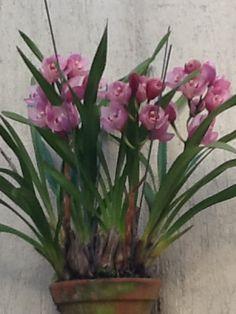 Muitas orquideas