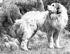 Drawing Nature and Landscapes : How to Draw Nature Outdoors with Drawing Lessons Step by Step Techniques for Cartoons & Illustrations Grass Drawing, Nature Drawing, Plant Drawing, Realistic Pencil Drawings, Graphite Drawings, Animal Drawings, Charcoal Drawings, Drawing Lessons, Drawing Techniques