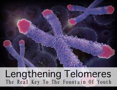 Telomere Lengthening Is The Real Key To The Fountain of Youth   http://improvedaging.com/telomere-lengthening-is-the-real-key-to-the-fountain-of-youth/