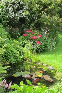 Pond and planting by Joy Grey Goose Green Design Ponds For Small Gardens, Small Ponds, Back Gardens, Garden Pond Design, Pond Water Features, Garden Fountains, Ponds Backyard, Garden Inspiration, Land Scape