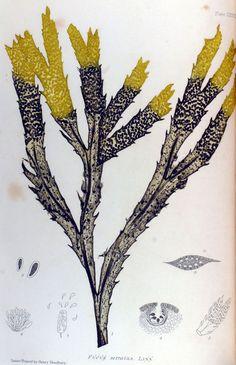 The nature printed British sea weed